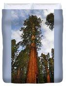 General Sherman Tree Duvet Cover