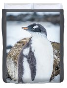 Gentoo Penguin With Turned Head On Snow Duvet Cover