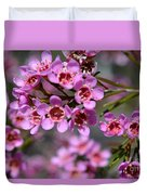 Geraldton Wax Flowers, Cwa Pink - Australian Native Flower Duvet Cover