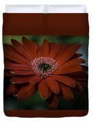 Gerber Daisy Duvet Cover by Rod Sterling