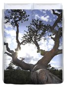 Gnarled Pine Tree And Sun Duvet Cover
