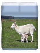 Goat With Just Born Little Goat Spring Scene Duvet Cover