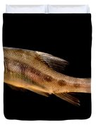 Golden Line Barbel Duvet Cover