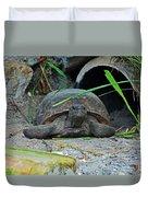 Gopher Tortoise II Duvet Cover