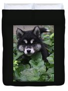 Gorgeous Alusky Puppy Playing Hide And Seek  Duvet Cover