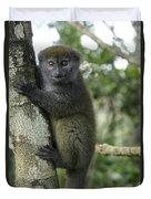 Gray Bamboo Lemur Duvet Cover