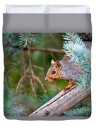 Gray Squirrel Pictures 93 Duvet Cover