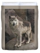 Gray Wolf On A Rock Duvet Cover