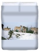 Gray Wolves Canis Lupus In A Forest Duvet Cover