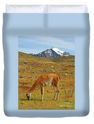 Grazing Guanaco In Patagonia Duvet Cover