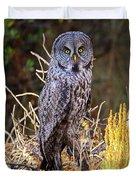 Great Grey Owl Portrait Duvet Cover