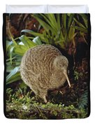 Great Spotted Kiwi Apteryx Haastii Male Duvet Cover by Tui De Roy