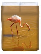 Greater Flamingo In The Water At Galapagos Islands Duvet Cover