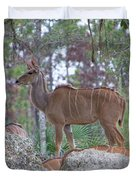 Greater Kudu Female - Rdw002756 Duvet Cover