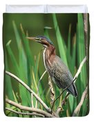 Green Heron At The Governor's Palace Gardens Duvet Cover