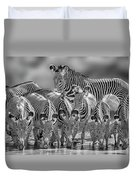 Grevy Zebra Party  7528bwc Duvet Cover