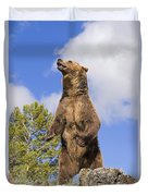 Grizzly Bear Standing On A Ridge Duvet Cover