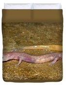 Grotto Salamander Duvet Cover