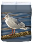 Gull On A Rope Duvet Cover
