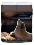 Harbor Seal In The Sun Duvet Cover