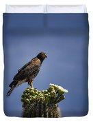 Harris Hawk Atop A Saguaro  Duvet Cover