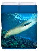 Hawaiian Monk Seal Duvet Cover