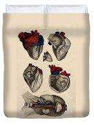Heart, Anatomical Illustration, 1822 Duvet Cover
