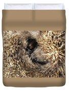 Hedgehog Curled Up Duvet Cover