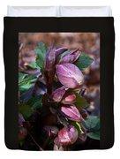 Heliborus Early Flower Buds 1 Duvet Cover