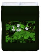 Herb Robert On The Ma At Duvet Cover