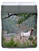 Horse 019 Duvet Cover