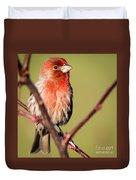 House Finch In Full Color Duvet Cover