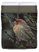 House Finch On A Rainy Day Duvet Cover