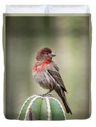 House Finch Perched On Cactus  Duvet Cover