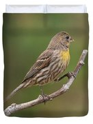 House Finch With Yellow Breast 1  Duvet Cover