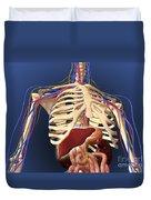 Human Skeleton Showing Digestive System Duvet Cover