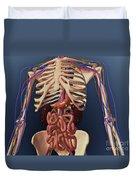 Human Skeleton Showing Kidney, Stomach Duvet Cover