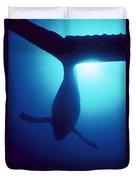 Humpback Whale Megaptera Novaeangliae Duvet Cover by Flip Nicklin
