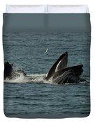 Humpback Whales Megaptera Novaeangliae Duvet Cover
