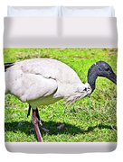 Ibis Looking For Food Duvet Cover