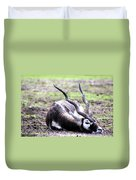 Indian Antelope Duvet Cover