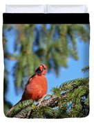 Inquisitive Male Cardinal Duvet Cover
