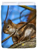 Inquisitive Squirrel Duvet Cover