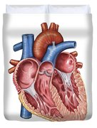 Interior Of Human Heart Duvet Cover