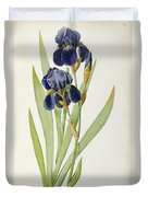 Iris Germanica Duvet Cover by Pierre Joseph Redoute