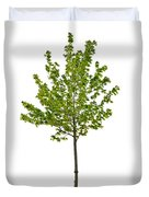 Isolated Young Maple Tree Duvet Cover by Elena Elisseeva