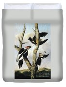 Ivory-billed Woodpeckers Duvet Cover