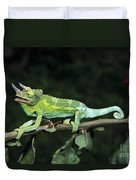 Jacksons Chameleon On Branch Duvet Cover by Dave Fleetham - Printscapes