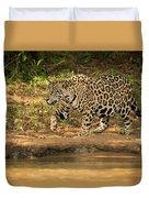 Jaguar Walking Beside River In Dappled Sunlight Duvet Cover