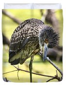 Juvenile Black Crowned Night Heron Duvet Cover